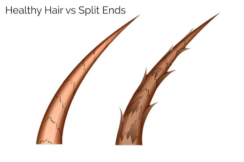 healthy hair strands vs split ends